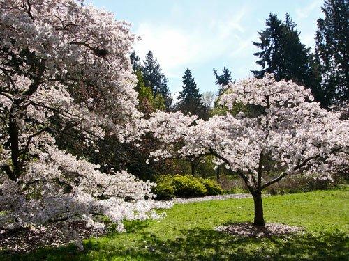 Washington Park Arboretum - University of Washington