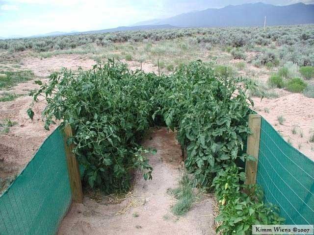 Outdoor Garden Vegee Plot