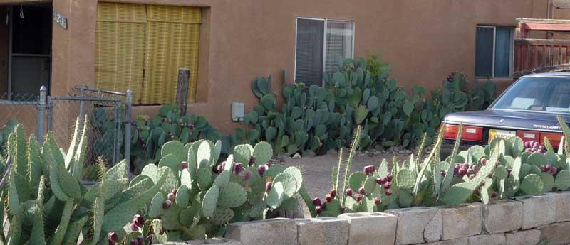 Cactus-Yard